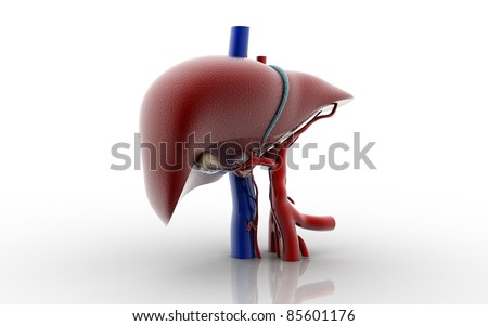 3d Liver and Gallbladder - stock photo