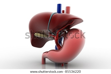 3D liver and stomach - stock photo