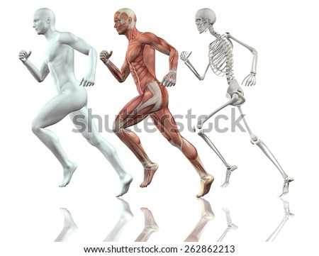 3D male figure running with skin, skeleton and muscle map - stock photo