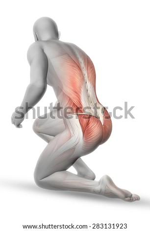 3D male medical figure with partial muscle map in kneeling position - stock photo