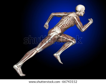 3D Man Running, Muscles and Skeleton, Side View - stock photo