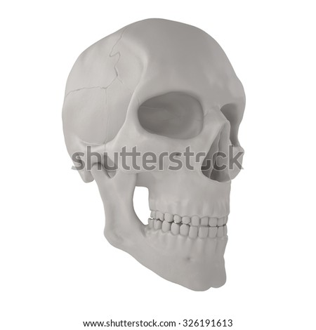3D projected realistic human scull isolated white - stock photo
