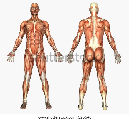 3D render depicting human anatomy - muscles - male - stock photo