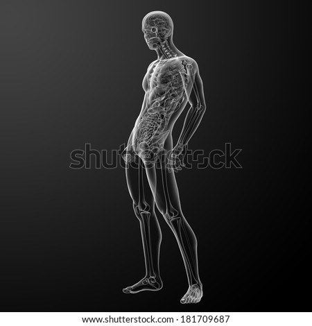3d render human anatomy - side view - stock photo
