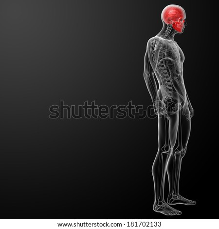 3d render human skull anatomy - stock photo