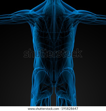 3d render illustration of the male muscle - back view - stock photo