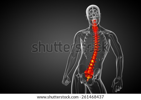 3d render medical illustration of the human spine - front view - stock photo