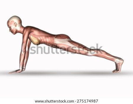 3D render of a female medical figure with muscle map in yoga position - stock photo