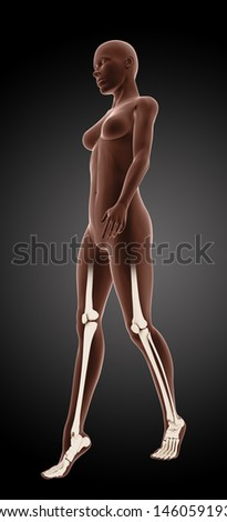 3D render of a female medical skeleton walking with knee and ankle highlighted - stock photo