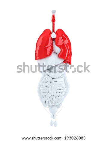 3d render of a human organs focused on lungs. 3d illustration. Contains clipping path - stock photo