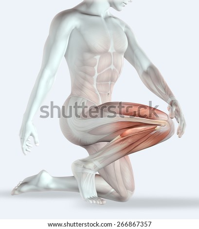 3D render of a male figure holding his knee in pain with muscle map - stock photo