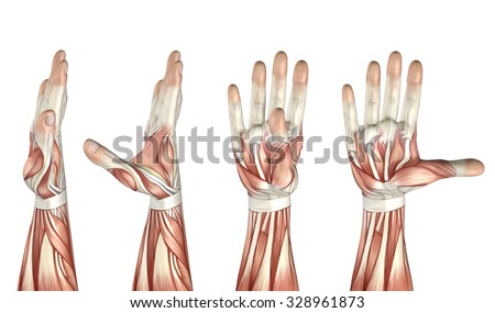 flight flexion of the thumb jpg 1200x900