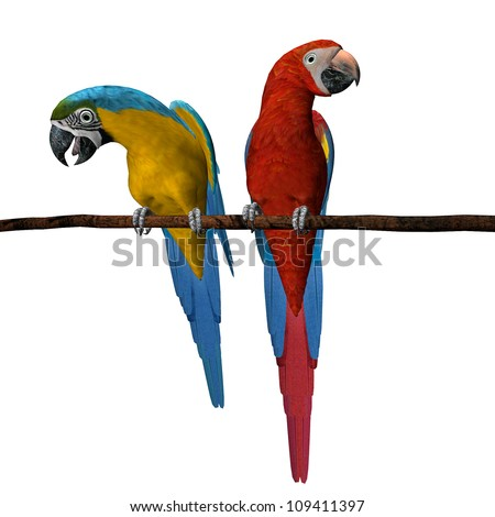 3D render of 2 scarlet macaws on a wooden perch isolated on a white background - stock photo