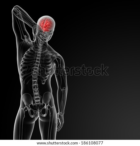 3d render of the human brain anatomy - back view - stock photo