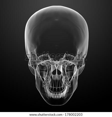 3d render skull on black background - bottom view - stock photo