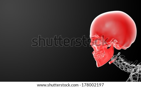 3d render skull on black background - side view - stock photo