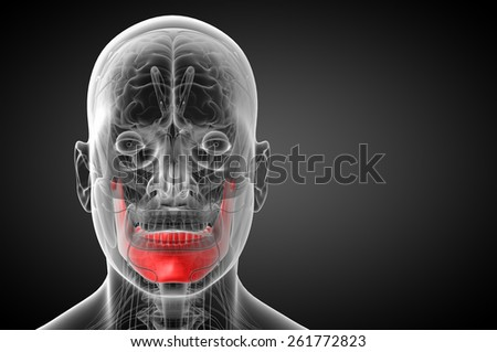 3d rendered illustration - jaw bone - front view - stock photo