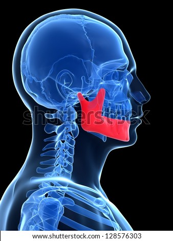 3d rendered illustration - jawbone - stock photo