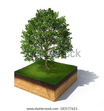 3d rendered illustration of cross section of ground with tall tree isolated on white - stock photo