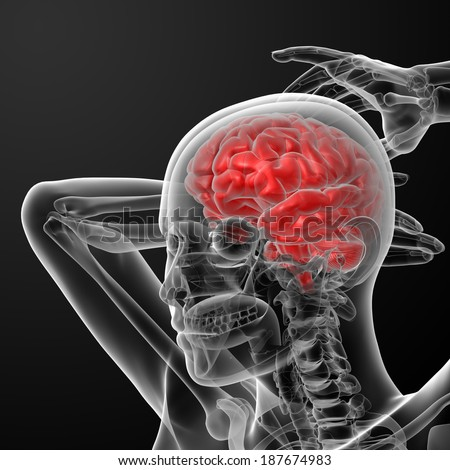 3d rendered illustration of the female brain - side view - stock photo