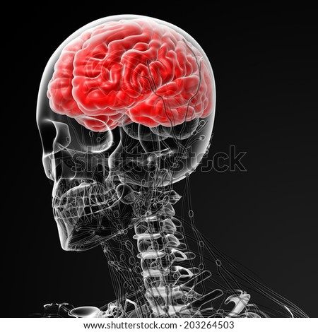 3d rendered illustration of the male brain -side view - stock photo