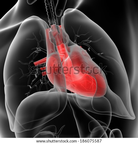 3d rendered of the human heart - close up - stock photo
