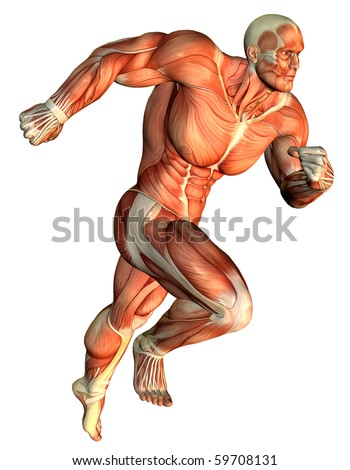3D Rendering Muscle galloping Body Builder - stock photo