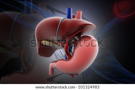 3D stomach and liver  on a color background - stock photo