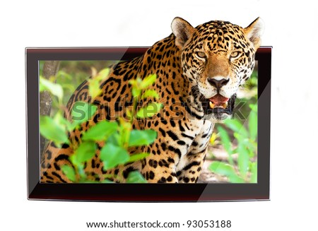 3D TV with jaguar on the display - stock photo