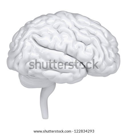 3d white human brain. A side view. Isolated render on a white background - stock photo