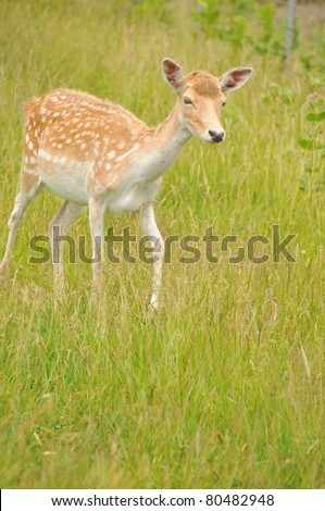 Deer are the ruminant mammals forming the family Cervidae. Species in the Cervidae family include White-tailed deer, Elk, Moose, Red Deer, Reindeer, Roe and Chital. - stock photo