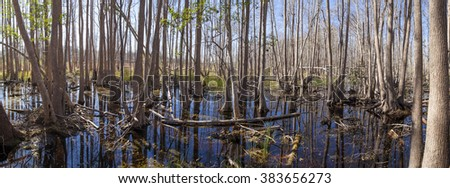 180 degree panorama of the Okefenokee swamp in early morning - stock photo