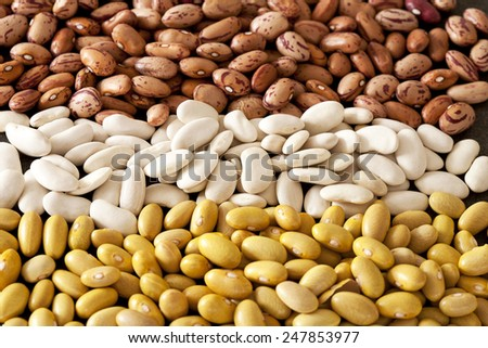 different pinto beans - stock photo