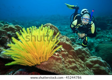 Diver underwater with feather starfish on foreground. Focus on diver - stock photo