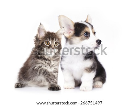 dog and cat,  isolated on white background - stock photo