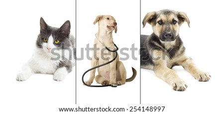 dog and Cat on a white background isolated - stock photo