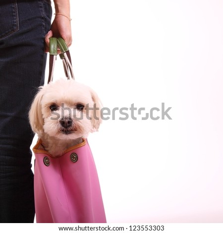 Dog in the bag - stock photo