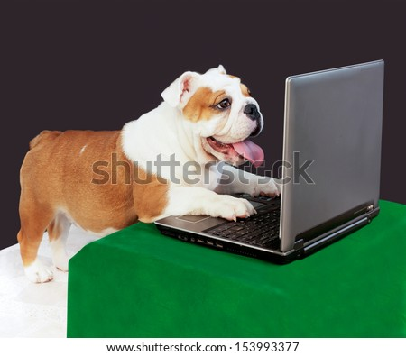 dog play computer. - stock photo