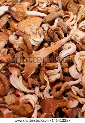 dried mushroom in slice - stock photo