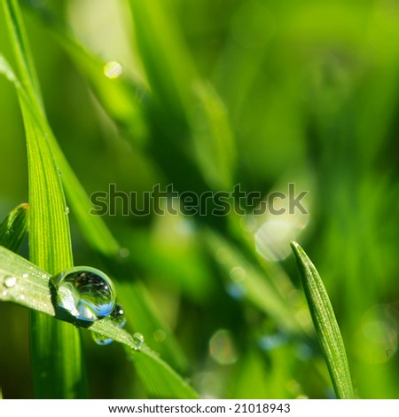 drop on a blade of grass - stock photo