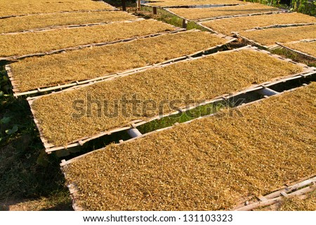 Dry tobacco leaf in bamboo plate - stock photo
