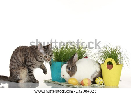 easter bunny and brown cat with easter eggs - stock photo