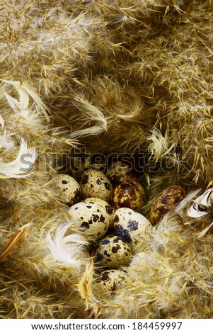 Eggs in the nest.                             - stock photo