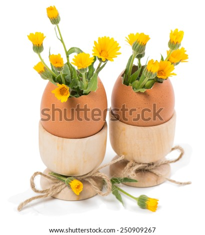 Eggshell in a wooden stands with yellow flowers  isolated on white. - stock photo