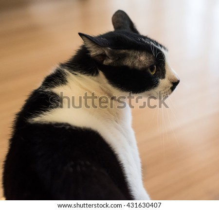 elegant cat - stock photo