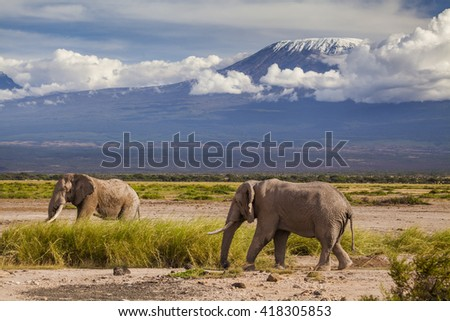 Elephants on Kilimajaro mount background. Kenya National Park. Africa. - stock photo