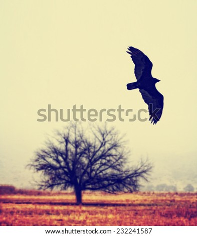 evening background with raven bird and bare twisted tree branches silhouette toned with a retro vintage instagram filter (grainy image) - stock photo