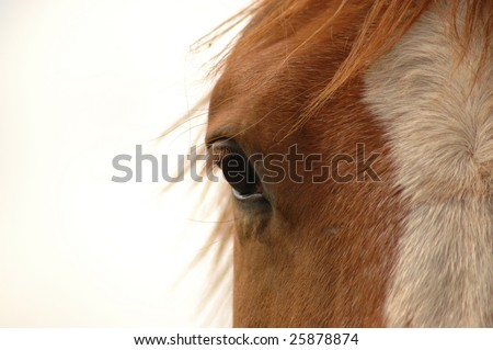 Eye of the horse on a white background - stock photo
