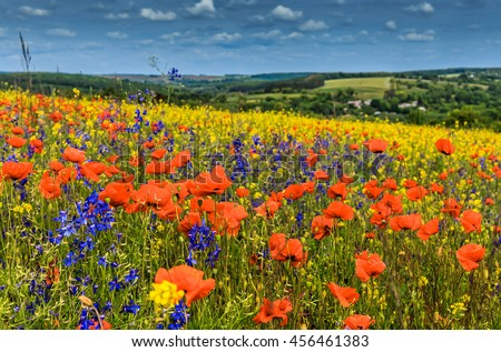 Fantastic sunny day flowering hills in the warm sunlight in the summer. dramatic sky with overcast clouds. majestic rural landscape. wonderful blooming field. dramatic picturesque spring scene.  - stock photo