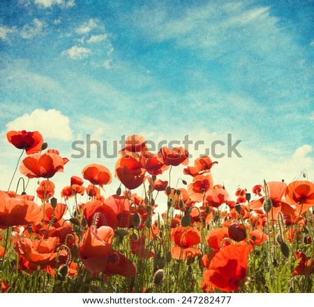Field of poppies   against blue sky with white clouds. Added paper texture - stock photo